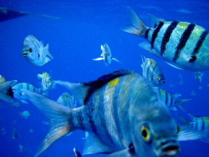 Red Sea scuba diving - by Maarten Schafer for CoolTravel
